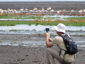 Photographing Lake Natron flamingos