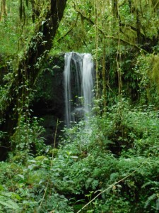One of the countless waterfalls you'll pass on Kilimanjaro