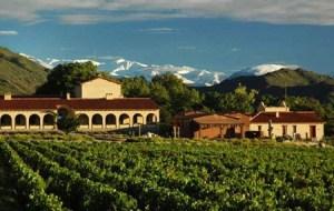 Colome Vineyard, Salta