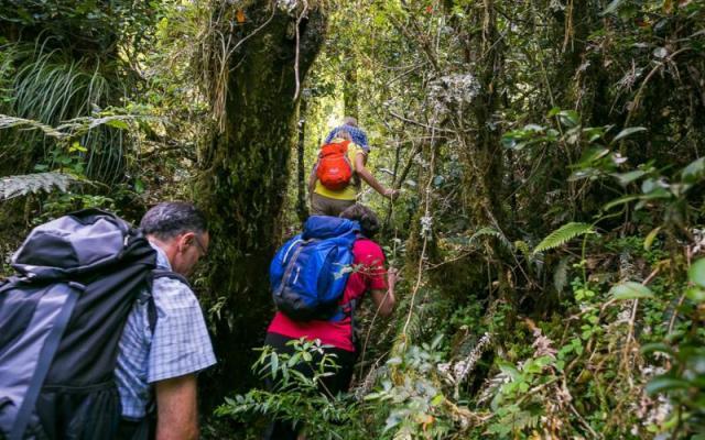 Trekking in the Huilo Huilo Biological Reserve