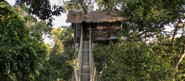 Amazon Treehouse