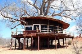 20121024-tarangire-treetops (17) (Large)