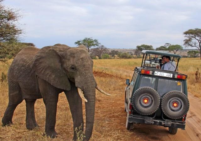 Elephant on 7-day group Tanzania safari