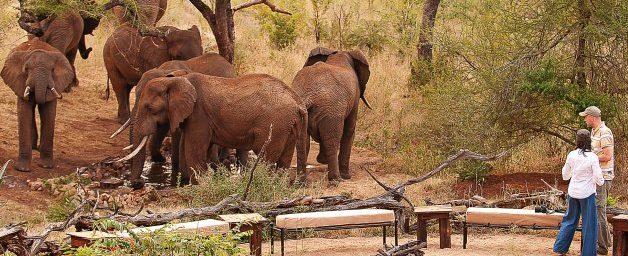 9-Day Family Tanzania Safari