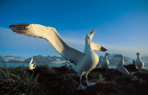 19-Day Falklands, South Georgia and Antarctica