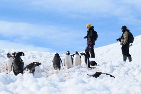 11-Day Emperor Penguin Voyage in the Weddell Sea