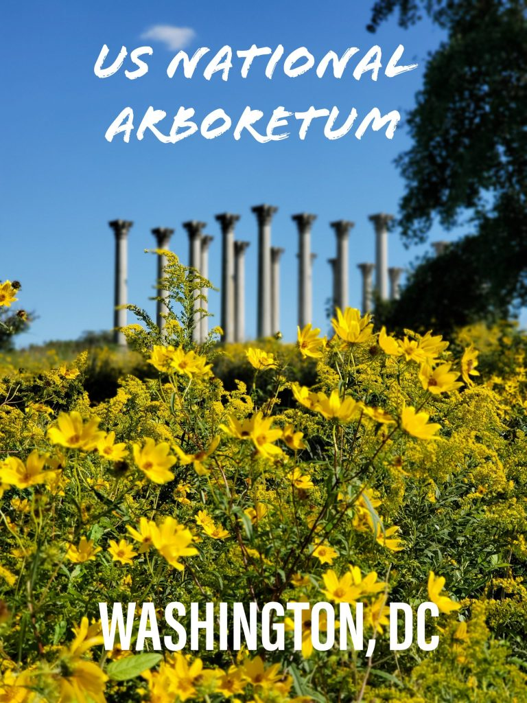 US National Arboretum in Washington, DC | Adventures with Shelby