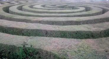 The maze is *huge*!