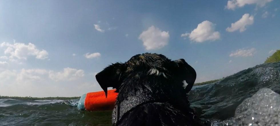 Memorial Day Dock Diving