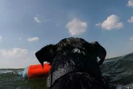 Memorial Day Dock Diving Practice