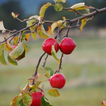 On our Huon Valley Farm Gate Trail day tour, we will visit passionate people behind some of the best food and beverages in Tasmania, tasting their produce.