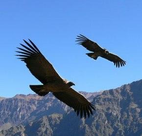 Valle de Colca Arequipa - Destinos Turísticos de Perú