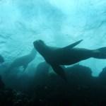 visitar una de las islas más emblemáticas de la costa peruana