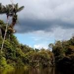 El Parque Nacional Güeppi-Sekime se encuentra en la provincia de Maynas del departamento de Loreto, Perú.
