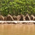 El parque Nacional Alto Purús es un parque nacional en la Selva Amazónica del Perú,