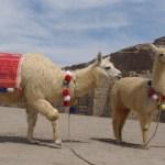 Museo_de_Sitio_Huaca_Pucllana_Lima_Perú