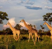 Principales destinos de turismo en África