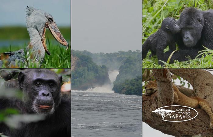 uganda's wildlife