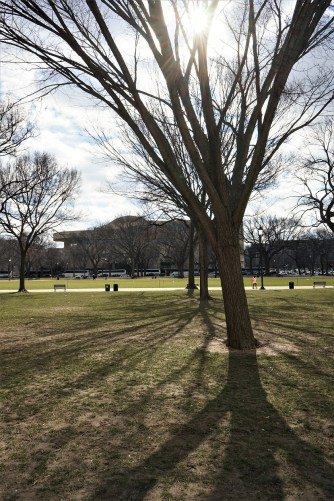 Alright, when the National Mall was redesigned in the early 20th century, rows of American Elms were placed alongside the main park area. This image just shows those rows of trees.