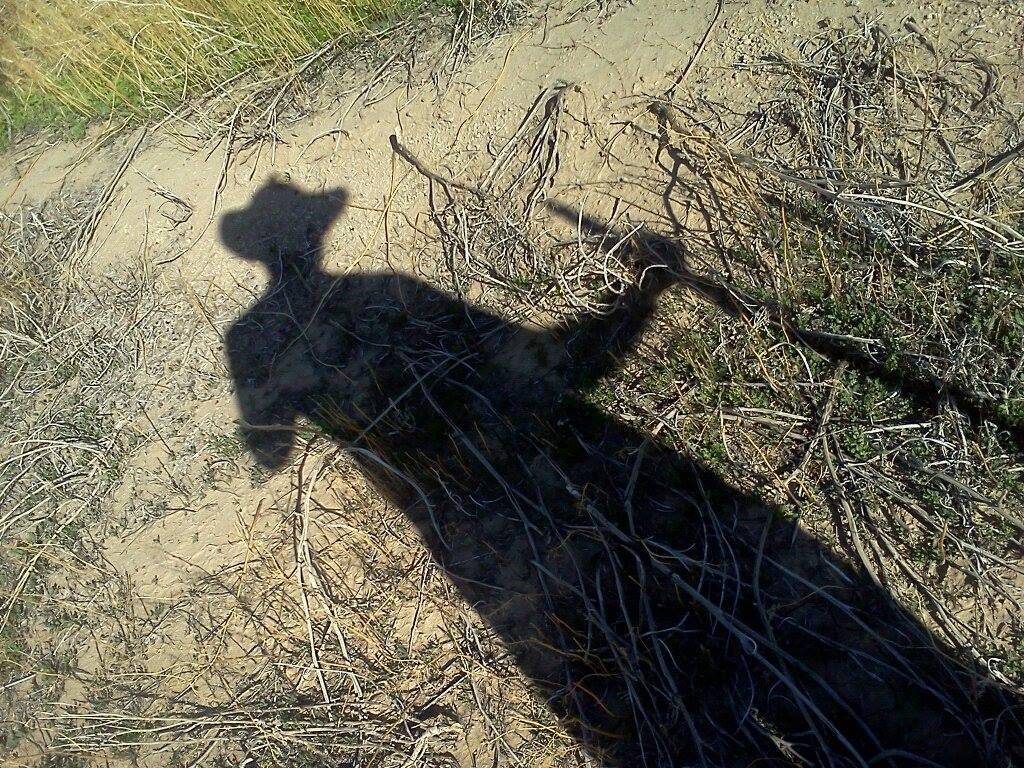 desert adventuring