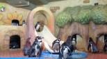 Finally, penguins. :)