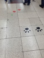 Paw prints when exiting via the Hachiko exit at Shibuya Station.