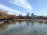Plenty of ducks and koi fish swimming around.