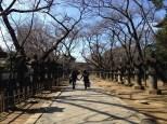 Path leading to the Toshogu Shrine.