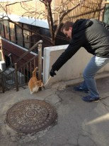 Of course Will spotted a cat. Then lured it with the smell of our just-eaten skewers.