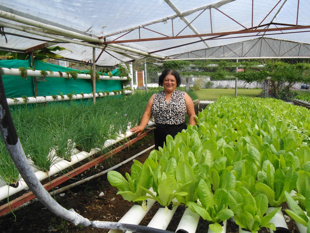 The Organic, Hydroponics Greenhouses of Boquete, Panama (1/6)