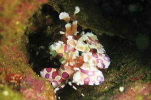 Costa Rica sea critters