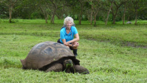 Galapagos Land Tortoises are huge!