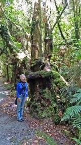 Tree covered walk near Franz Josef