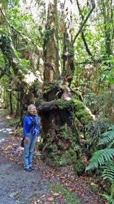 Tree covered walk near Franz Josef