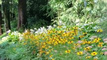 Tupare garden in New Plymouth - garden flowers
