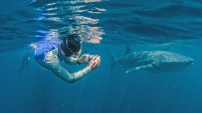 Exmouth Ningaloo Exmouth Diving Centre Whale Shark Swim and Tom photo credits kissthedolphin