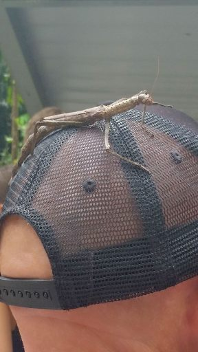 Stu from Foaming Fury tours with Walking Stick insect