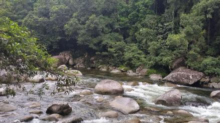 Rex Creek in rainforest of Mossman Gorge