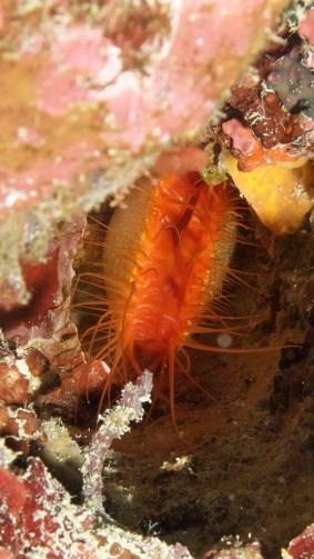 Bivalve mollusk image credit Sola Hayakawaa