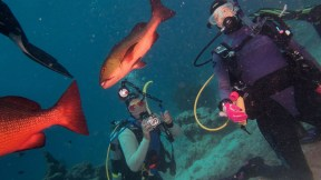 Ocean perch and divers, image credit Sola Hayakawa
