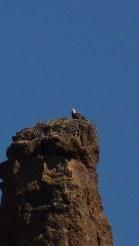 Bald Eagle Canyon Lake Apache Trail