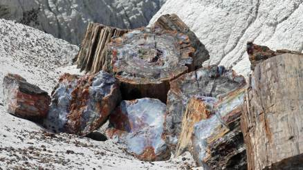 Petrified Forest - colorful quartz replica of 200 million years old trees.