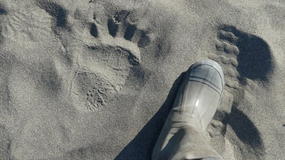 Bear paws prints in sand at Lake Clark