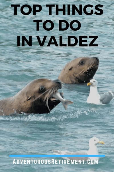 Top Paid and Free Things to DO in Valdez - Steller sea lions feasting on salmon returning to their hatchery
