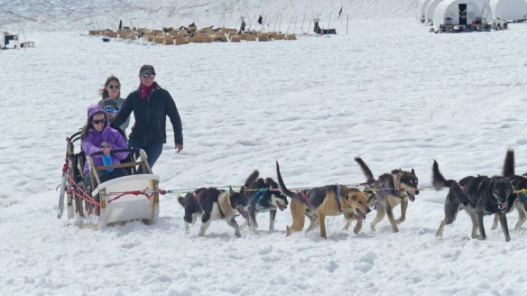Dog sledding in Juneau in the summer