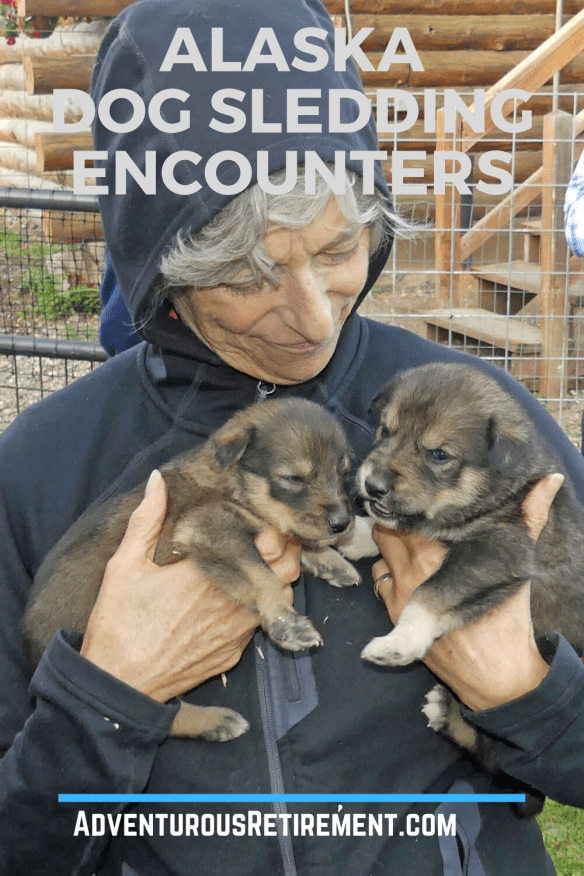 Wendy with two sled dog puppies during a visit to Trail Breaker Kennel in Fairbanks, AK