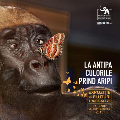 Expozitie de fluturi tropicali vii la Antipa