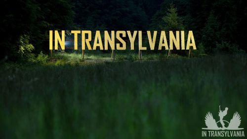 In Transylvania, MORE THAN A MUSIC FESTIVAL 7
