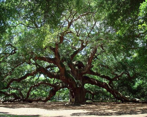 Local's Picks | Best Charleston…