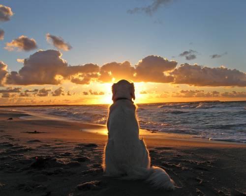 Travel Guide To Charleston Dog…